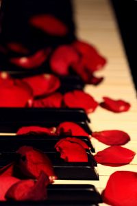 Płatki czerwonych róż